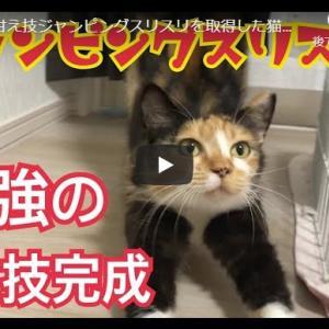 最高デレ技を取得した猫|最強の甘え技ジャンピングスリスリを取得した猫がかわいい!【保護4日目】
