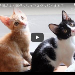 ごはんが楽しみすぎる猫たち!|ご飯の時間だよ!猛ダッシュでスタンバイする子猫たち【保護子猫】