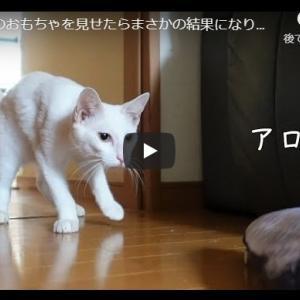不審な魚を警戒する猫|猫に魚のおもちゃを見せたらまさかの結果になりました…【保護猫】