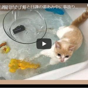 ネズミ捕りゲームで知能を見せつける猫|【悲報】風呂好き子猫と日課の湯あみ中に事故りました