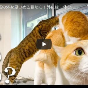 窓に乗り出す猫の後ろ脚が可愛すぎる|仲良く窓の外を見つめる猫たち!外には一体なにが…??