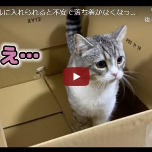 狭い箱の中、ドキドキと落ち着かない猫 段ボールに入れられると不安で落ち着かなくなっちゃう猫がかわいい…