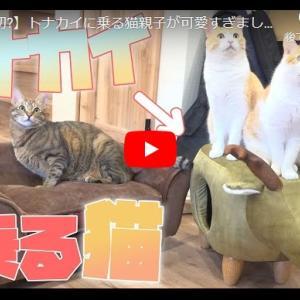 オシャレ猫ハウスに乗る猫が素敵すぎる! 【世界初?】トナカイに乗る猫親子が可愛すぎました...