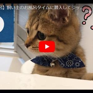 猫は何故お風呂にやってくるのか!好奇心旺盛のまんまる瞳が可愛い子猫に悶死|【お風呂】飼い主のお風呂タイムに潜入してジッとみてきた子猫