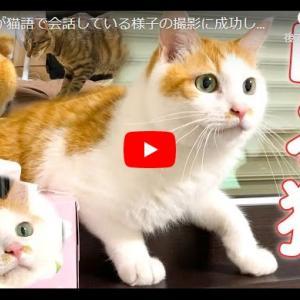 猫語を交わしている猫ズが可愛すぎて~! 猫同士が猫語で会話している様子の撮影に成功しました