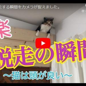華麗な脱走劇|猫が脱走する瞬間をカメラが捉えました。