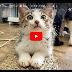 責任感のある飼い主とは、がよくわかる参考動画 子猫を家族に迎えた理由についてお話しします