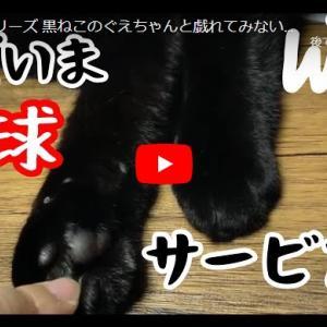 黒猫とイチャイチャ体験動画 体験シリーズ 黒ねこのぐえちゃんと戯れてみない?肉球サービス有〼