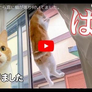 NINJA CAT 朝起きたら窓に猫が張り付いてました。