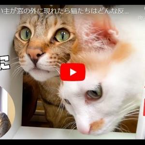 主イリュージョンに猫ズは…|急に飼い主が窓の外に現れたら猫たちはどんな反応するの?