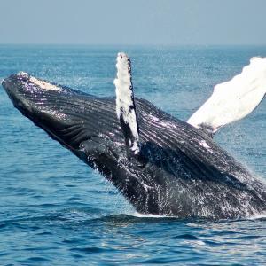 ビットコインをクジラの動きからチャートを予想する