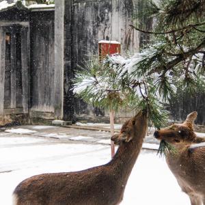 はじめて見る奈良の雪景色(2021.1.12)