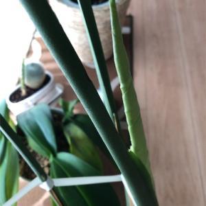 元気な植物たちを紹介します!モンステラ・サボテン、ついでに豆苗!