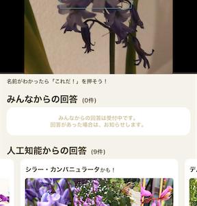 花の名前を調べるには?無料アプリ「GreenSnap」を使ってみました!