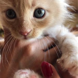 猫さんの写真で癒されてます!
