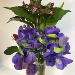紫の花シリーズ・・山紫陽花(ヤマアジサイ)とスイトピーその他色々