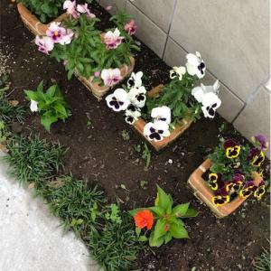 サンパチェンスを昨年と同じく植えました!