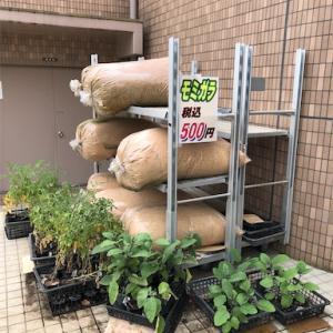 農産物直売所で発見!大量のモミガラが500円!!
