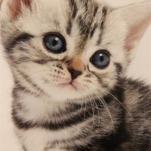 我家の猫達を紹介します!