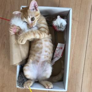 暑中お伺い 仔猫とおもちゃの詰合わせ!