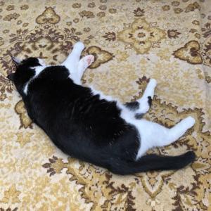 母の家のクロ 猫一匹で留守を守ってます!