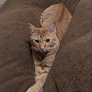 寒い季節の猫あるある・・猫と一緒に寝る!