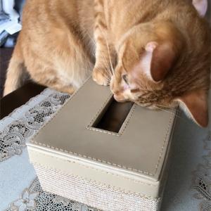 ティッシュボックスの猫的使い方