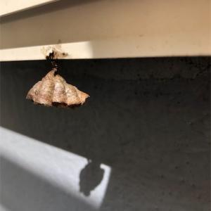 ベランダにハチの巣を発見!