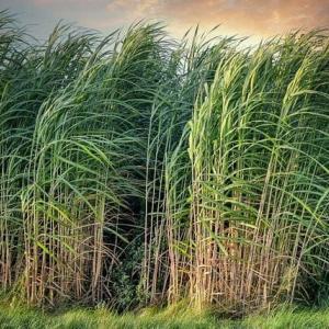 砂糖の帝国-イスラムの隆盛と食(4)