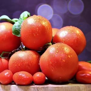 トマト-ヨーロッパにやって来た新しい食(3)