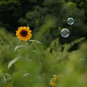 万博公園の楽しみ」⇒「夏のおわり」