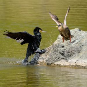 万博公園の楽しみ」⇒「鳥の喧嘩」