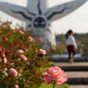 万博公園の楽しみ」⇒秋の「バラ園」