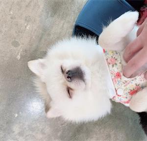 【京畿道・富川】韓国の保護犬カフェに行ってきた!