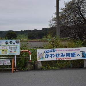 かわせみ河原(埼玉県)No.5
