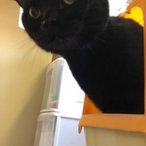 猫トイレ対策本部