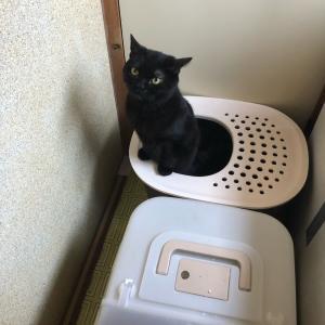 普通にトイレ使ってくれ