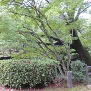 台風だけど四国へ 2日目⑤ 廃墟 屋島甚五郎