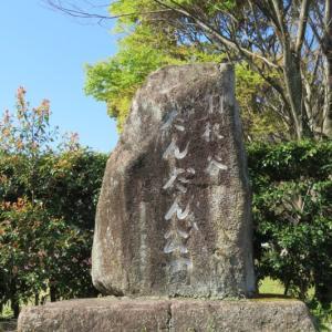 桜だより 岐阜だんだん公園の八重桜 2021/4/10