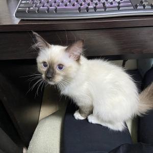 スノウさんの猫キック&超アップ