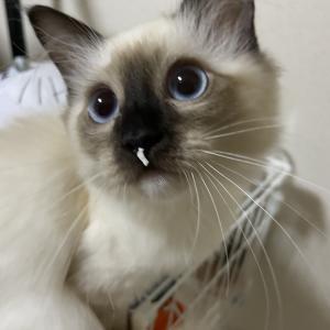 ゴミを鼻につけた猫とキャッチボール