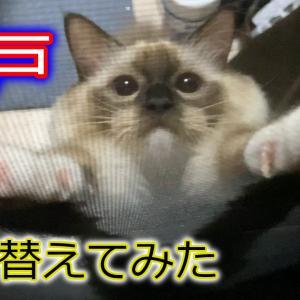 猫の爪にボロボロにされない網戸に張り替えてみた!【DIY・ラグドール】
