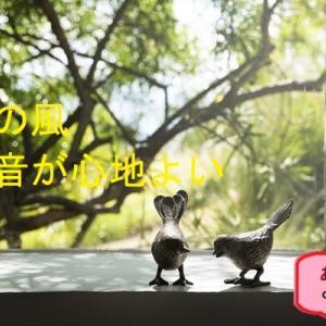 ♪網戸の季節♪