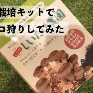 【椎茸観察日記1日目】しいたけ栽培キットで自宅キノコ狩りしてみた
