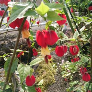 庭を彩る花たちにありがとうの神様からのメッセージ