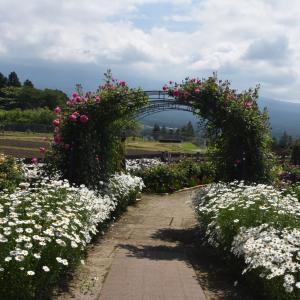 バラの花便り~白糸自然公園