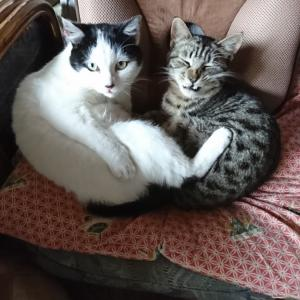 心を和ませ癒しを与えてくれるネコたちの力関係