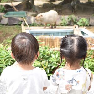 横浜市の金沢動物園。700円の図鑑オススメです!