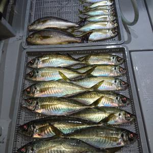 50センチオーバーのアジが連発する大分県蒲江沖のコマセ釣りについて