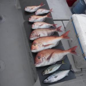 大分 落とし込み釣り(船)について(タックル、仕掛け、釣り方等)